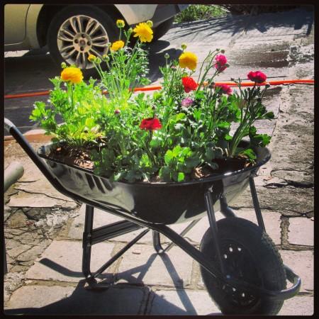 carrinho de mão com flores