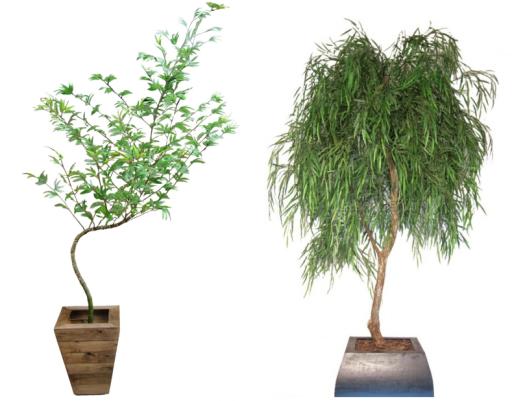 bambu e chorao artificial