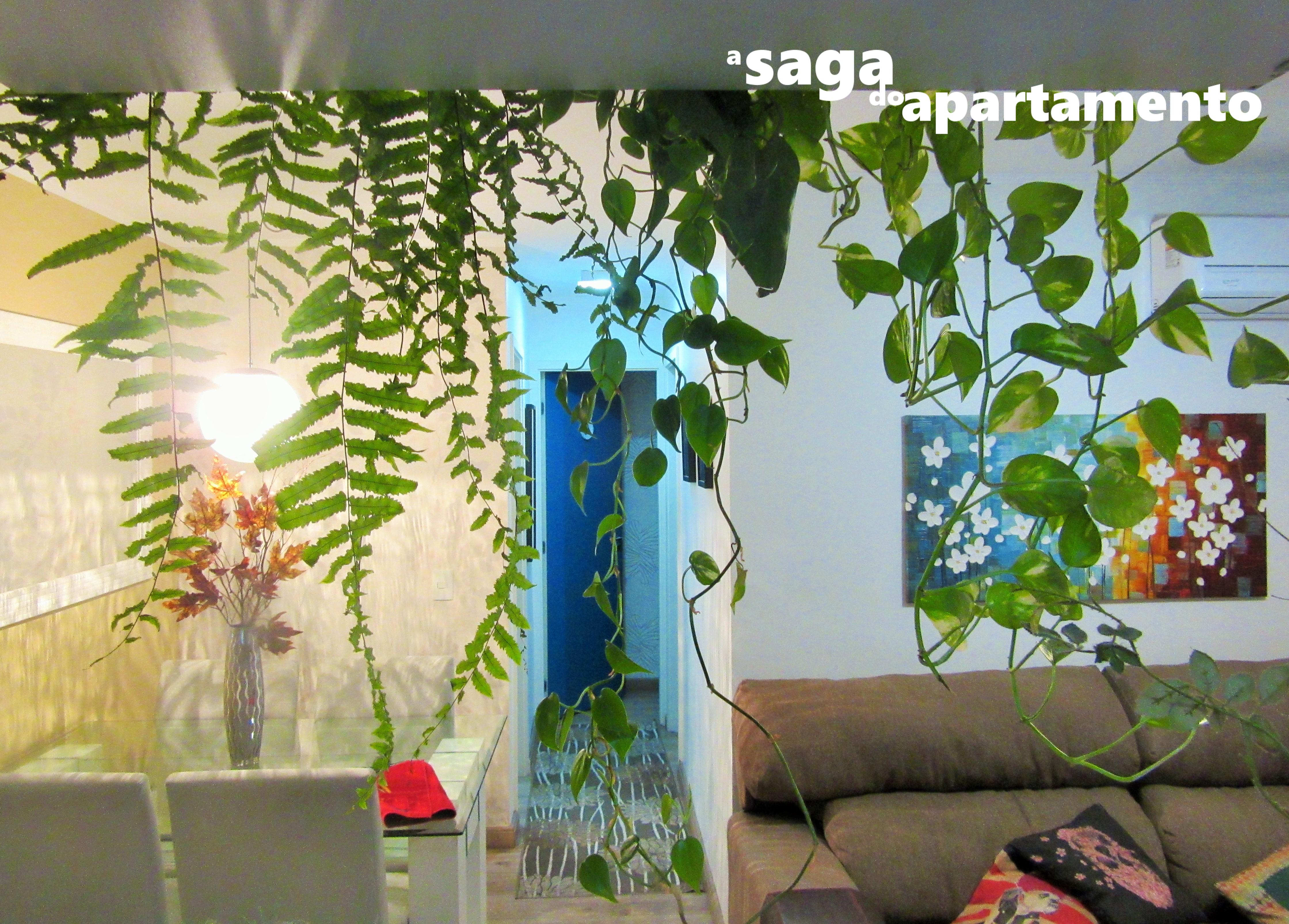 Cortina De Plantas Dividindo Sala E Cozinha A Saga Do Apartamento