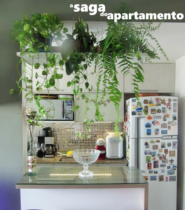 plantas-decoracao-interna